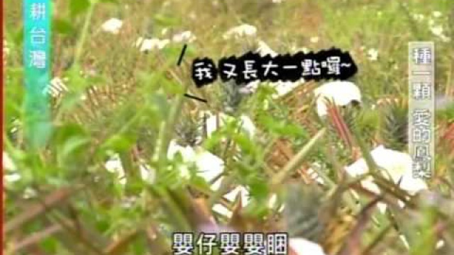 Embedded thumbnail for 東海岸的「原」聲天籟